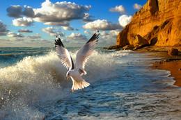 Шторм и чайка / Севастопольский берег