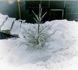 Фрагмент зимы / В лесу родилась ёлочка. Антипод )