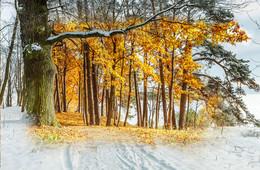 Назад восень / Зимние и летние образы той же локальной манипуляции
