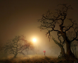 Красный зонтик / туман