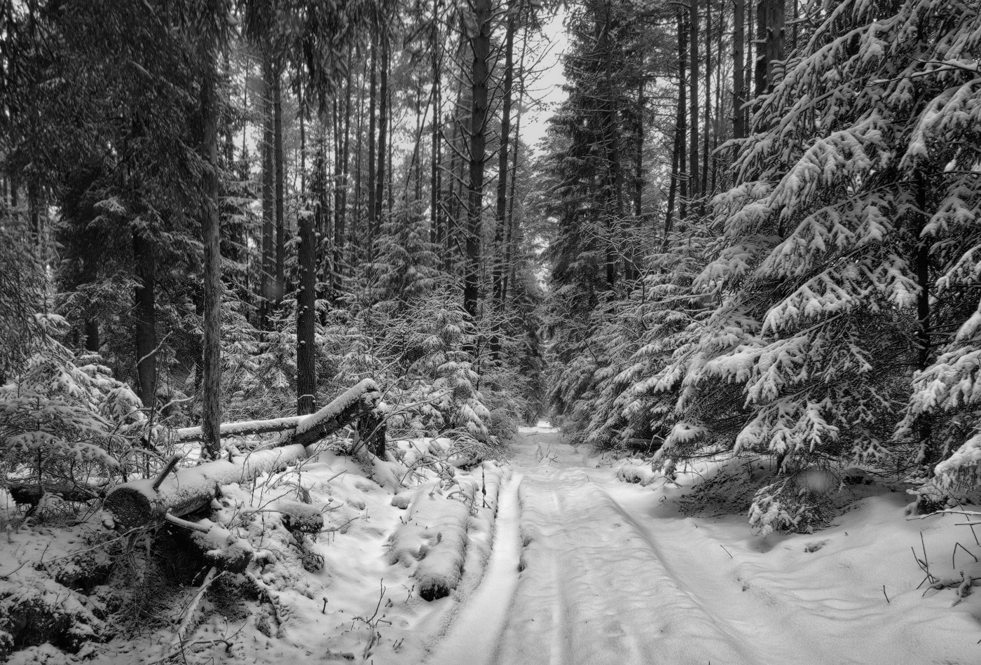 Прохожую в лесу 9 фотография