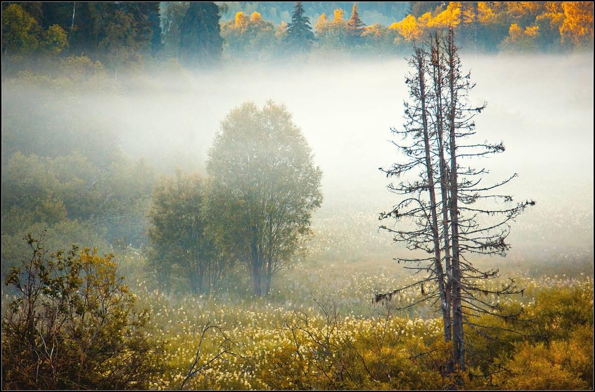 Природа архангельской области фото