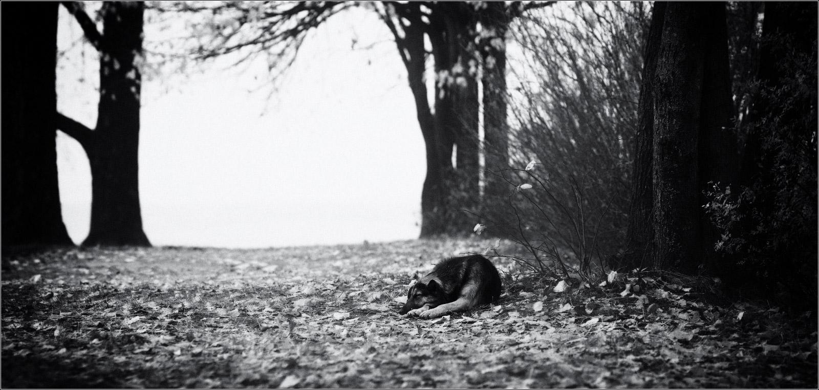 Одиночество - сволочь ........ / альтернативный вариант в ч/б ...