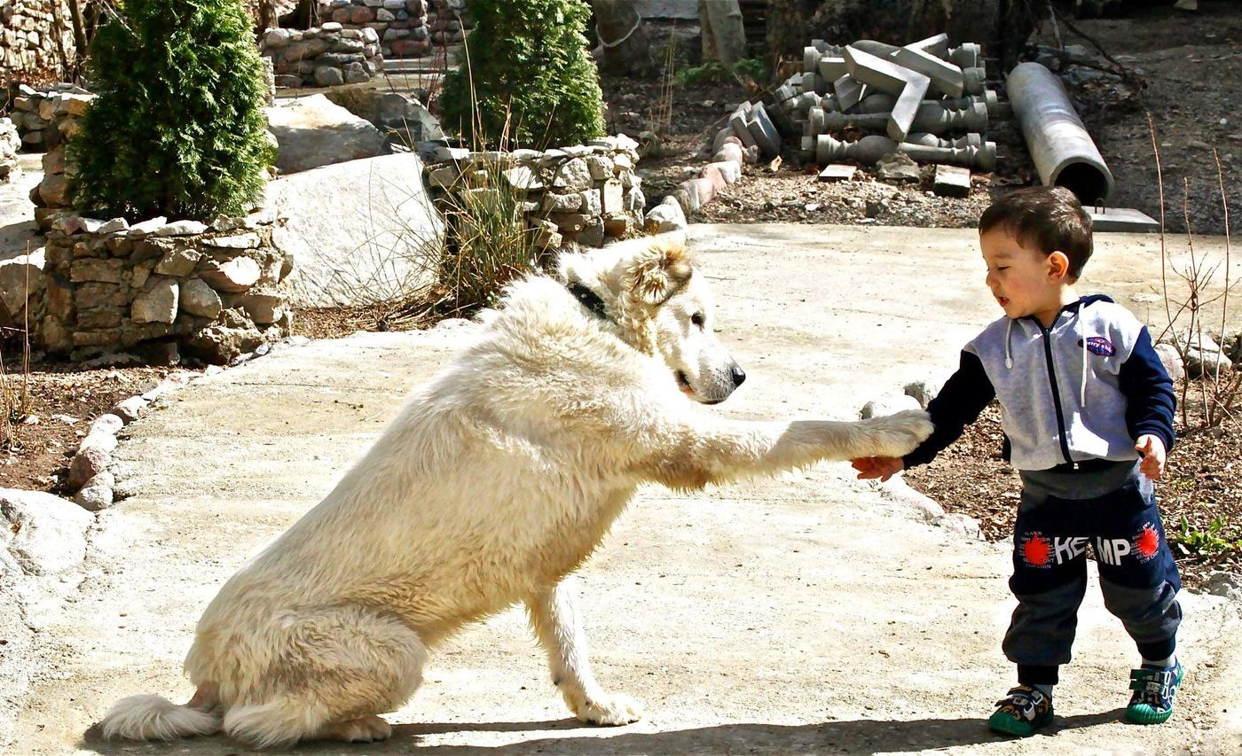 Сабака йибат девчка таджикистан 5 фотография