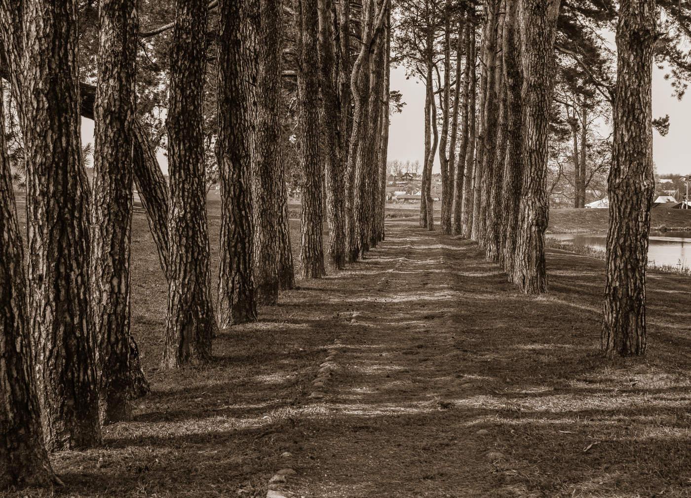 Узенькая тропинка по которой савушкин 3 фотография