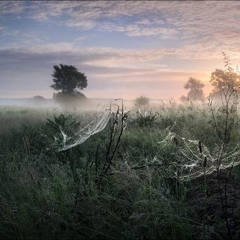 Утро купалось в рассветном тумане